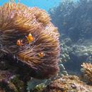 Great Barrier Reef   Triggerhappy901  2015    iStock 68029313   mindsket