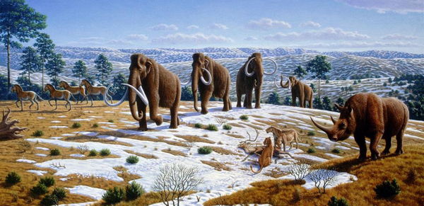 Ice age fauna of northern Spain   Mauricio Anton