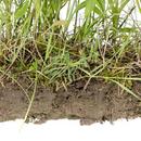 Planters evne   COLOURBOX5597780   mindsket