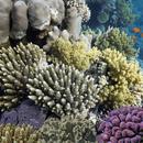 Forskellige koraller   COLOURBOX11797414   mindsket