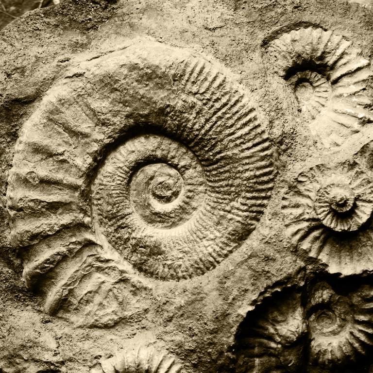 hvordan bruges carbon dating til at bestemme alder af fossiler